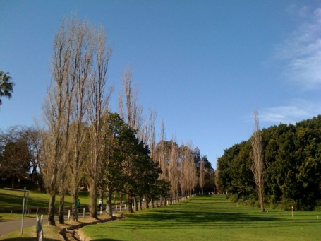 Beautiful trees line the hill from Leichhardt through to the Rozelle section of the walk