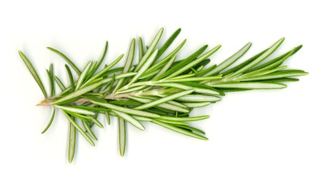 Rosemary grows wild on the hills in Gallipoli - remembering our ANZACs