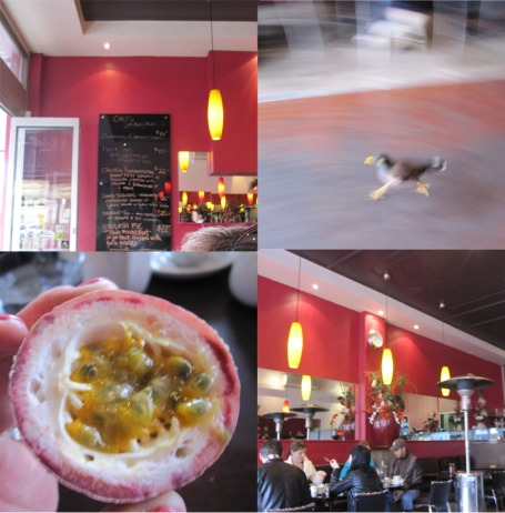 Inside Fundamentals; crazy bird runs the gauntlet; a zingy passionfruit from our random fruit bowl
