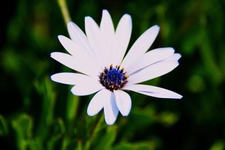 A wild daisy grows on the hill